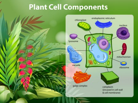 Illustration for Plant cell components diagram illustration - Royalty Free Image