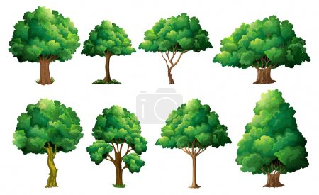 Illustration for Illustration of a set of different trees - Royalty Free Image