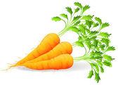 Výživné mrkev