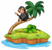 A monkey above the coconut tree