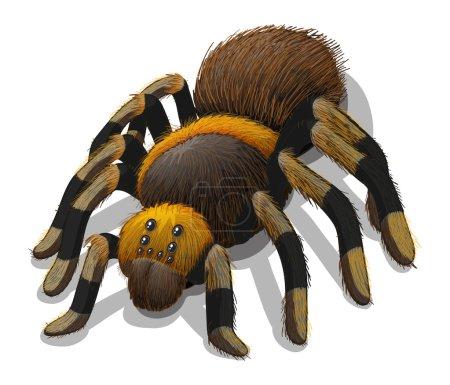 A Tarantula spider