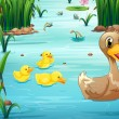 Illustration of ducks swimming in the pond...