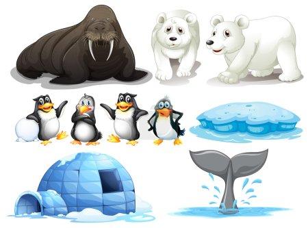 Illustration pour Illustration de différents animaux du pôle nord - image libre de droit