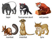Illustration of six different kind of animals