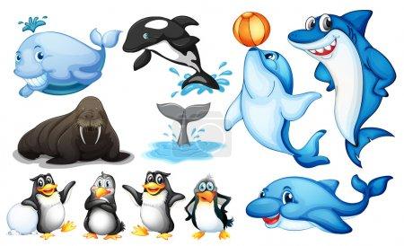Illustration pour Illustration de nombreux types d'animaux marins - image libre de droit
