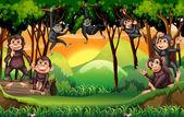 Opice v džungli strom lezení