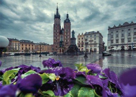 Violet flowers of Market square