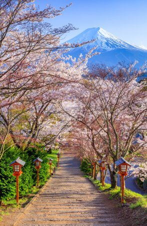 Path to Mt. Fuji in spring, Fujiyoshida, Japan