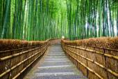 Pfad zum Bambus Wald, Arashiyama, Kyoto, Japan