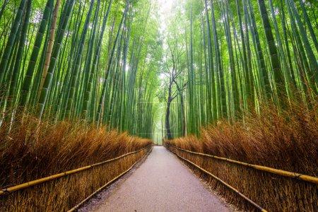 Photo pour Chemin d'accès au bambou forêt, Arashiyama, Kyoto, Japon - image libre de droit