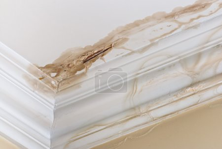 Photo for Peeling paint on an interior ceiling a result of water damage caused by a leaking pipe dripping down from upstairs a result of substandard plumbing completed by an unqualified plumber. A common house insurance claim. - Royalty Free Image