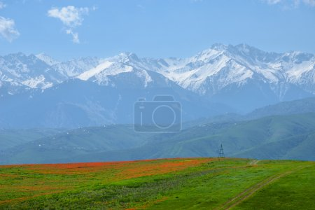 Magic red poppies against the backdrop of grandiose mountains