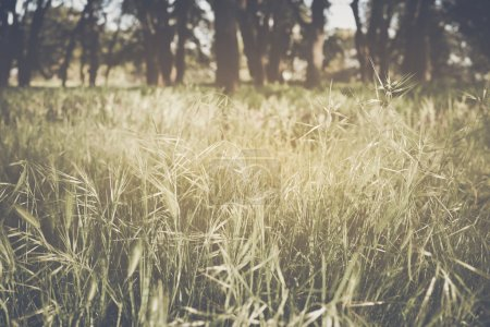Photo for Blurred Nature Background with Instagram Style Filter - Royalty Free Image