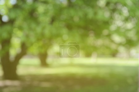Blurred Nature Background