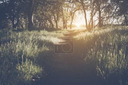 Photo for Sunlight in the Forest with Retro Instagram Style Filter as background - Royalty Free Image