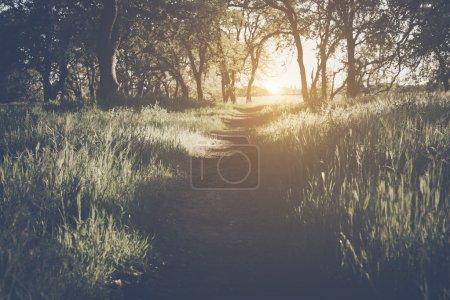 Photo pour Lumière du soleil dans la forêt avec filtre de Style rétro Instagram comme toile de fond - image libre de droit