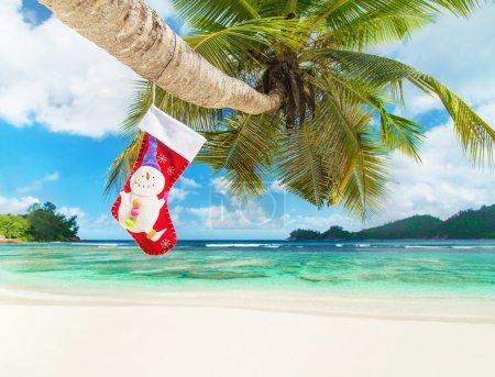Christmas sock on palm tree