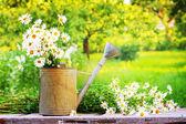 Letní zahrada s květy sedmikrásky