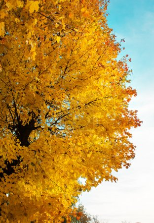 Foliage in the autumn park