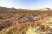 Duny na ostrově Amrum