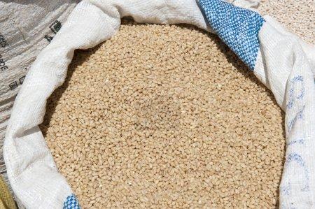 Dry Grain Outdoors