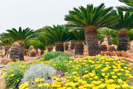 Flowers and palm trees in botanical garden.