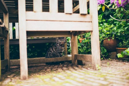 Tabby cat sitting under table
