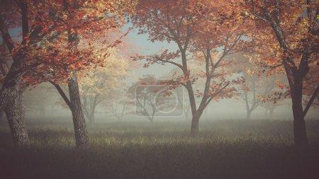 Photo pour Forêt d'automne dans la brume . - image libre de droit