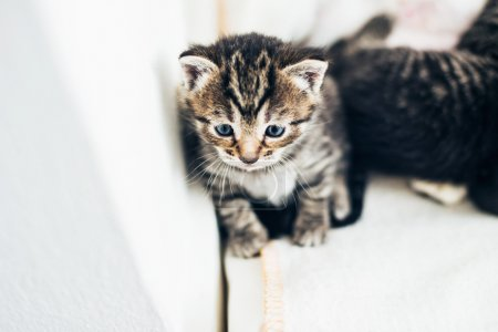 Foto de Adorable pensive tiny tabby kittens sitting leaning against the wall staring ahead with big blue eyes, high angle view - Imagen libre de derechos