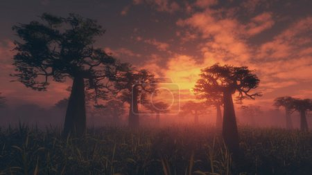 wilderness with tall silhouetted trees