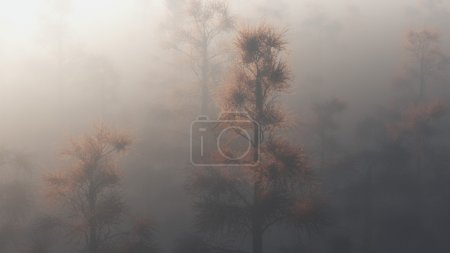 Tops of pine trees appear through fog.