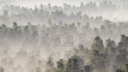Photo pour Aérien de pinède dans la brume . - image libre de droit