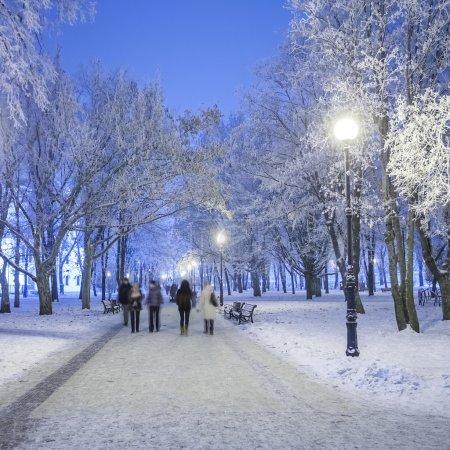Photo pour Sentier pédestre dans un fabuleux parc d'hiver - image libre de droit