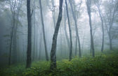 Forest with fog after rain