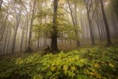 Green forest with fog