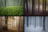 Seasons in the forest: spring, summer, autumn, winter