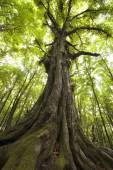 old green tree in forest