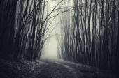 road through trees landscape