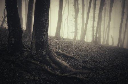 dark spooky misty forest