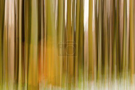 Abstract forest with long exposer, beautiful colorful background