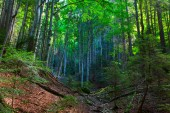 Colorful forest in Carphatian Mountain
