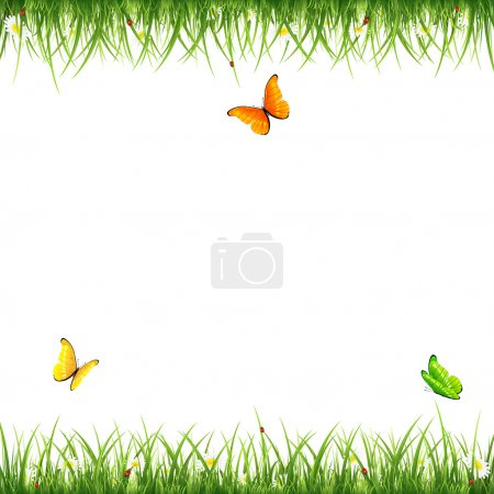 Grass with butterflies and ladybugs on white background