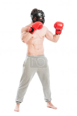Boxer or fighter side view