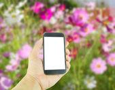 Ruky hospodářství inteligentní phoner na květinové pozadí