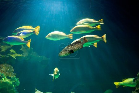 fish in Underwater Aquarium