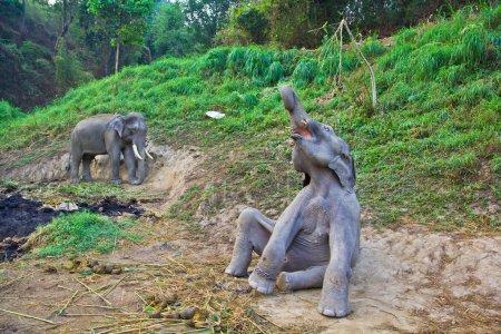 wild Thailand Elephants