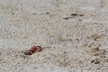 Crab on sandy beach