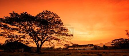 Photo pour Coucher de soleil d'hiver dans la nature, avec des silhouettes d'arbre - image libre de droit