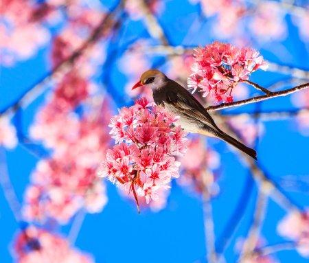 Bird on Cherry Blossom