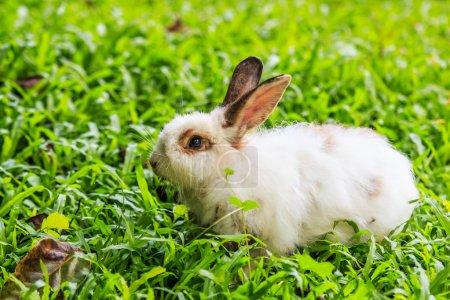 Bunny on green grass
